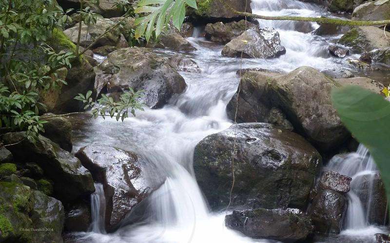 Hawaii Forest Waterfall photo