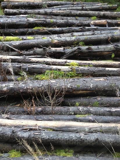 Ageing log pile photo