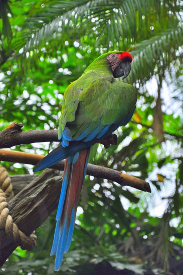 green blue and red macaw parrot in close up photography photo