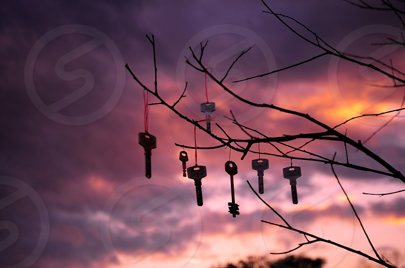 silver keys on brown wooden branch photo