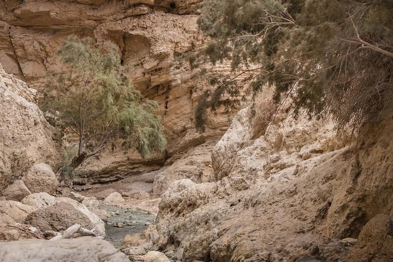 Just Dead Sea Oasis  Israel  photo