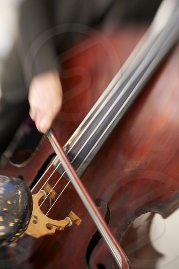 brown cello photo