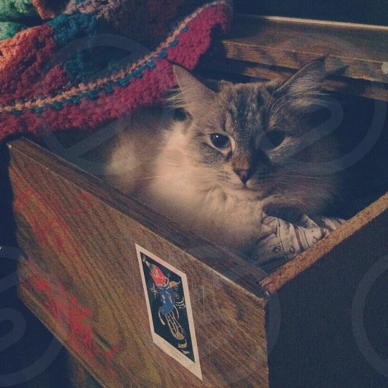Cat in a drawer photo