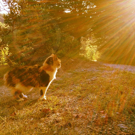 Cat in the sun rays.  photo
