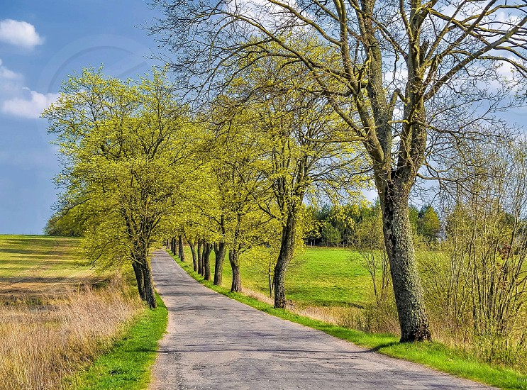 spring green trees road colours sunny photo