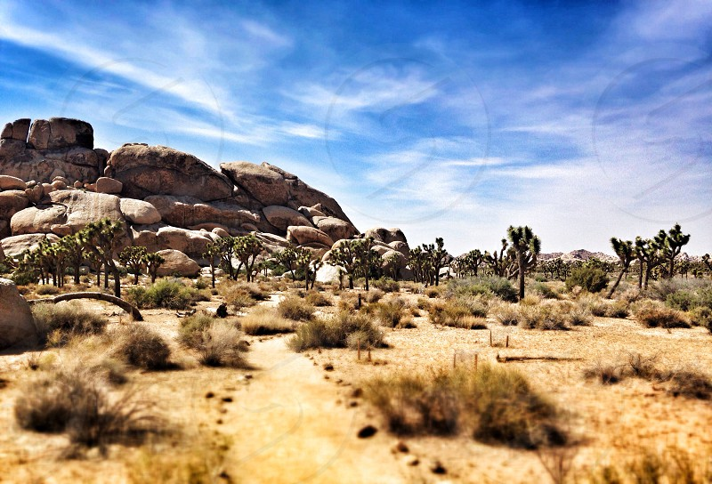 Sunny day at Joshua Tree National Park. Large clusters of boulders are great for a day of climbing photo