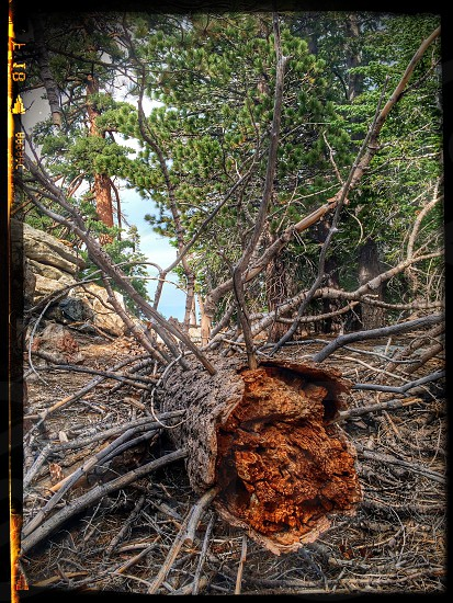 Broken Tree photo