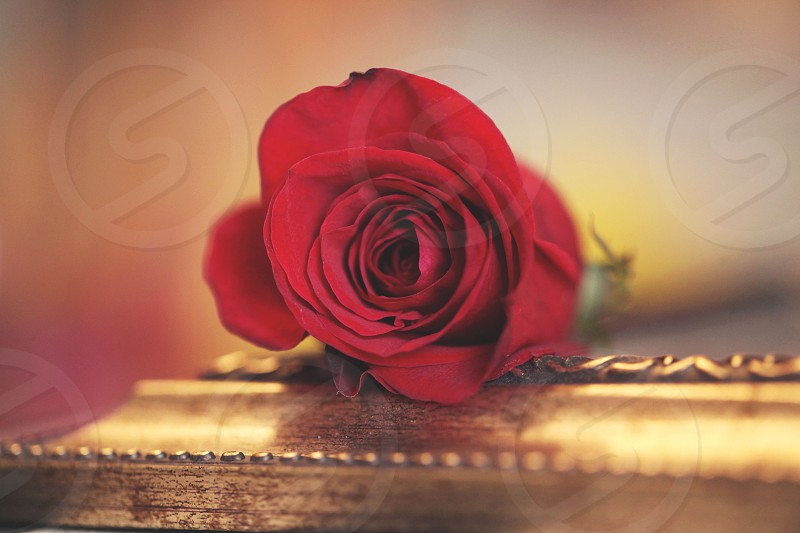 A rose by any other name.... photo