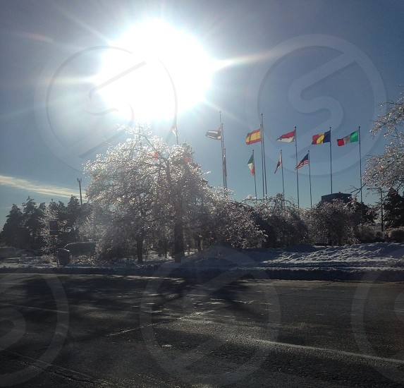 Flags and icy trees photo