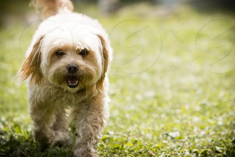 dog green photo