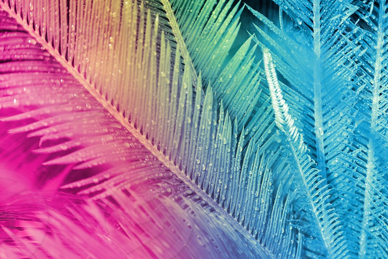Close-up of palm leaves in the field painted in neon light in minimal style. Copy space vacation concept. photo