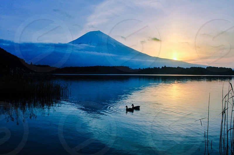 2 ducks on lake with mountain background during yellow sunset photo