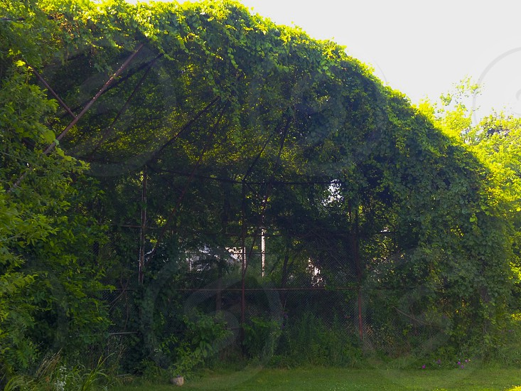 overgrowth photo