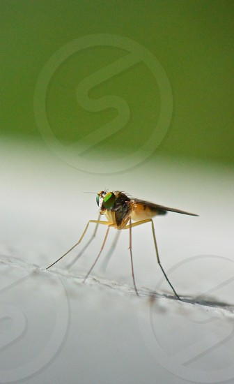 green and brown mosquito macro photography photo