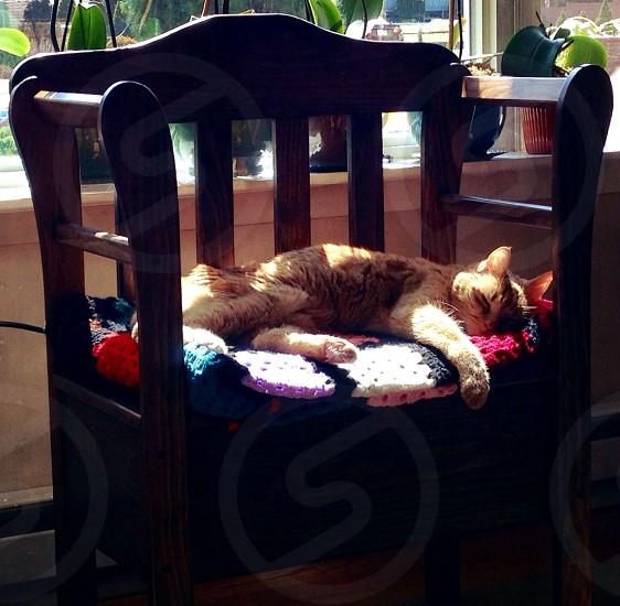 orange tabby cat sleeping on brown wooden chair photo
