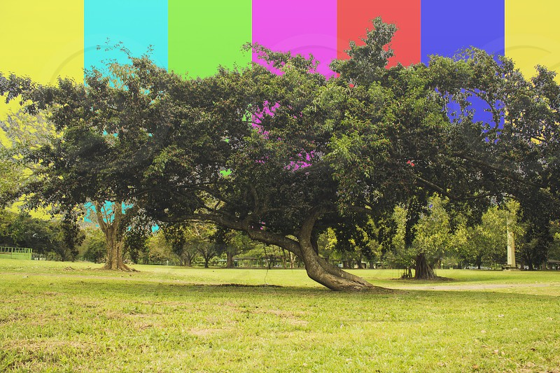 green and brown tree near grass feild photo