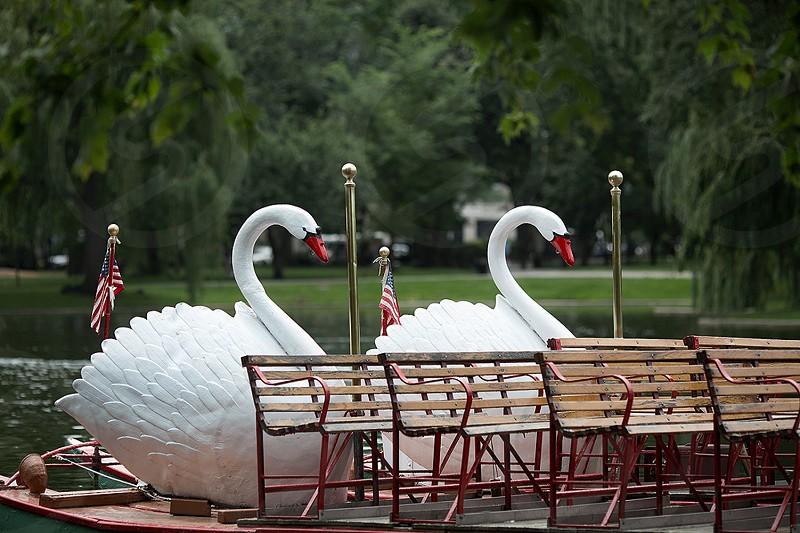 Boston Swan Boats In Summer- American Flags photo