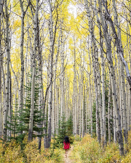 photography of woman in red dress walking towards trees photo