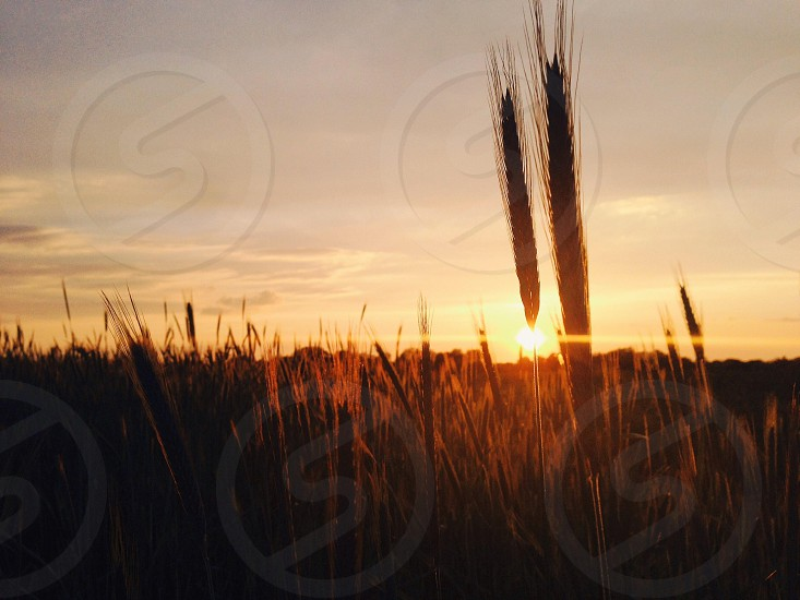 view of the sunset at the fields photo