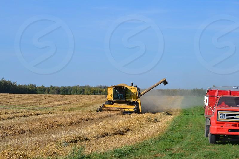 Fall Harvest - Barley photo