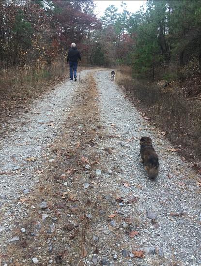Hike dogs walk trees woods path photo