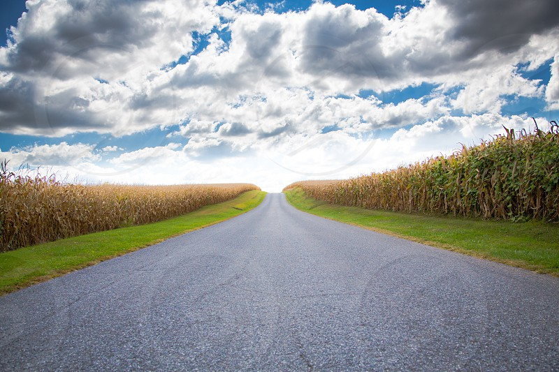 open road with corn fields photo