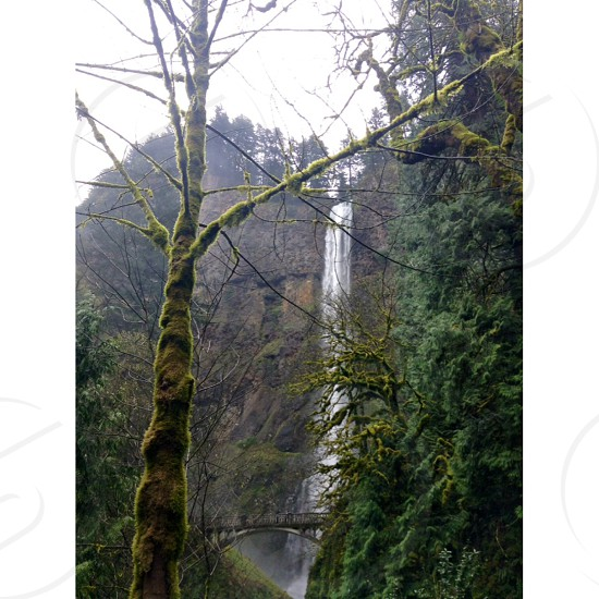 Multnomah Falls Oregon photo