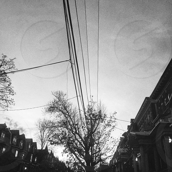 West Philly Silhouette  photo