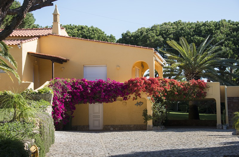 big villa in portugal with bougainville flowers and palmtree next to the house photo