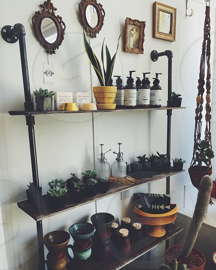 assorted succulent plants on brown wooden shelf photo