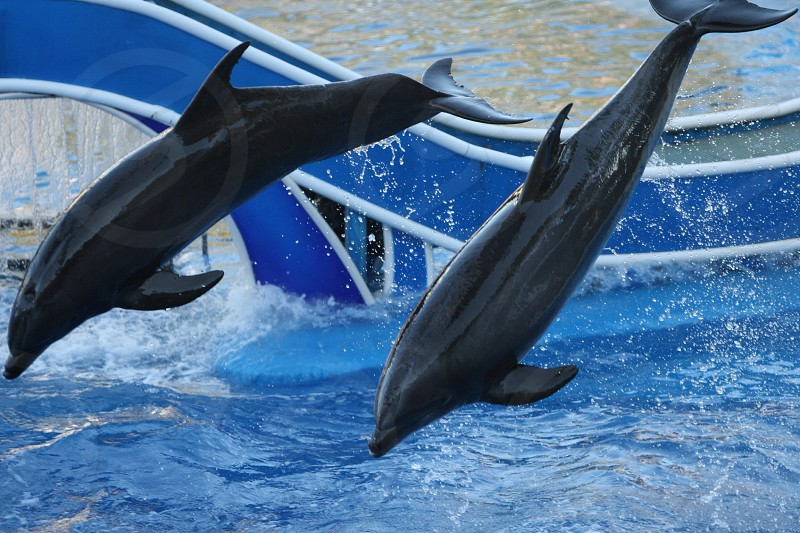 Jumping dolphins sea world photo