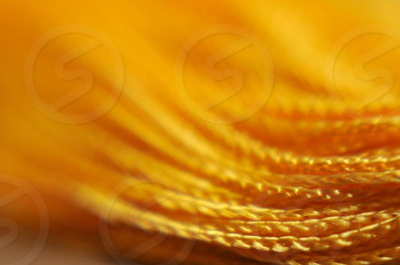 Yellow tassle photo