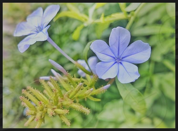 pastel spring photo