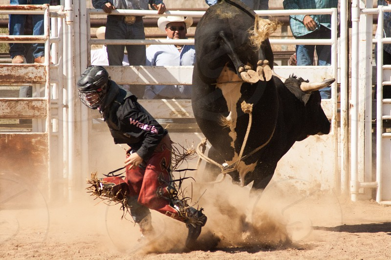 Close call rodeo photo