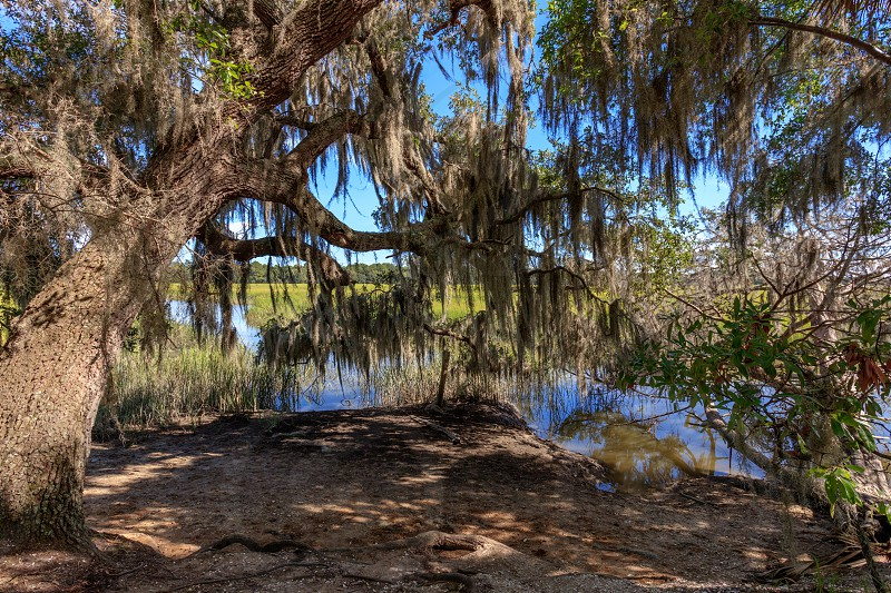 willow tree beside body of water during daytime photo