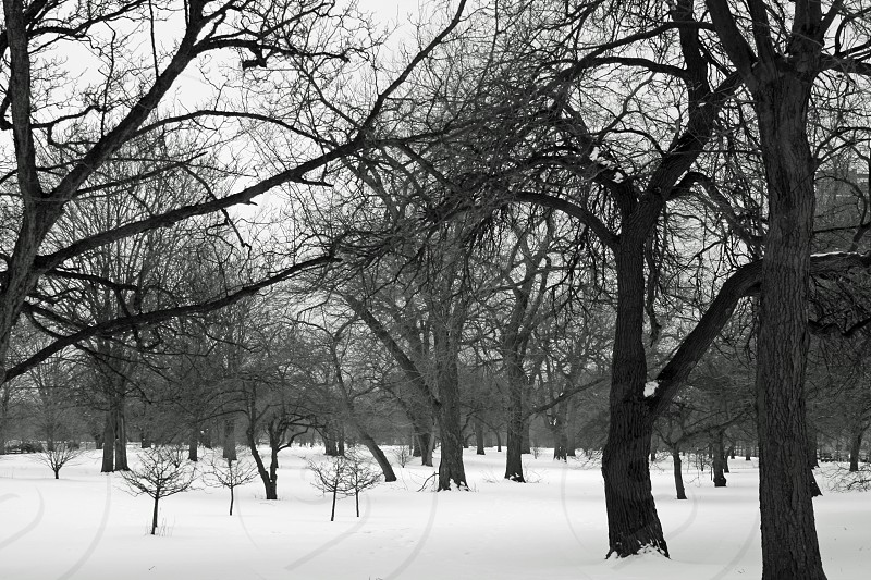 Hyde Park in Winter photo