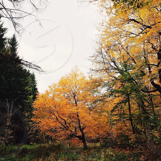 orange leaves photo
