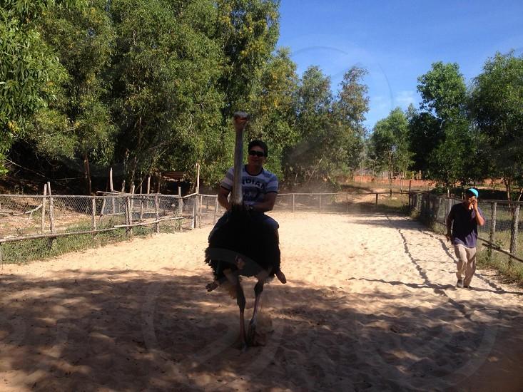 ostrich run photo