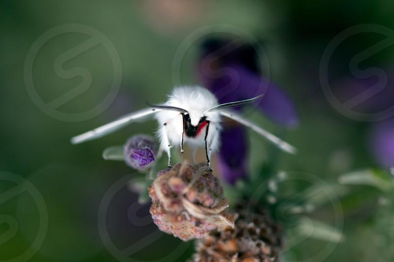 white moth photo