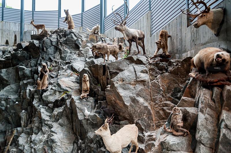 Stuffed animals on display. Endangered Eurasian species. photo
