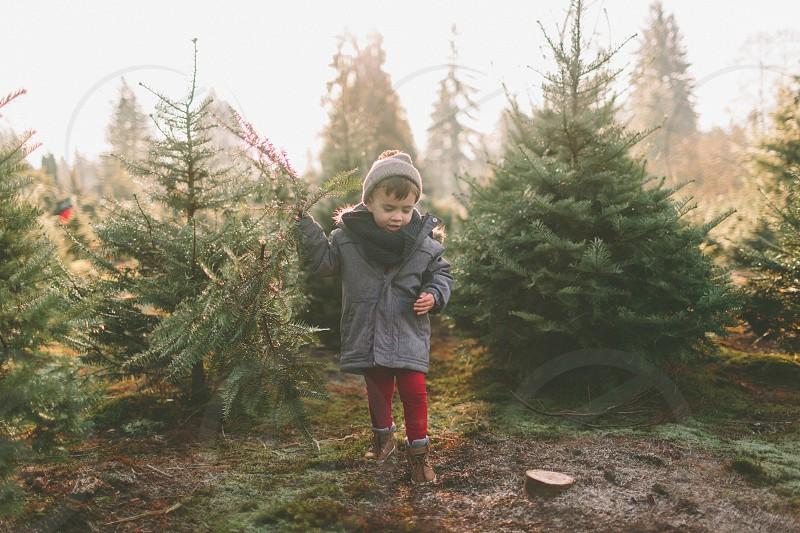 A little boy at a Christmas tree farm.  photo