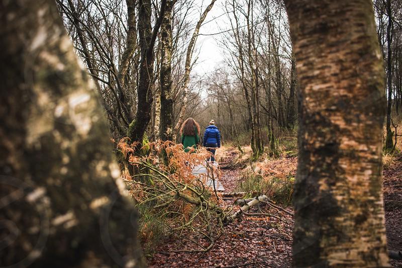 Autumn woodland wandering. photo