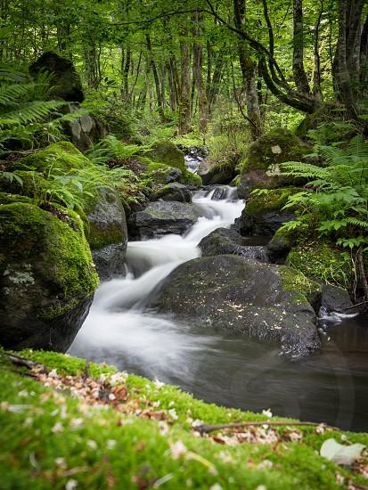 Hidden stream somwhere in woodland of Akita prefecture Tohoku area Japan. photo