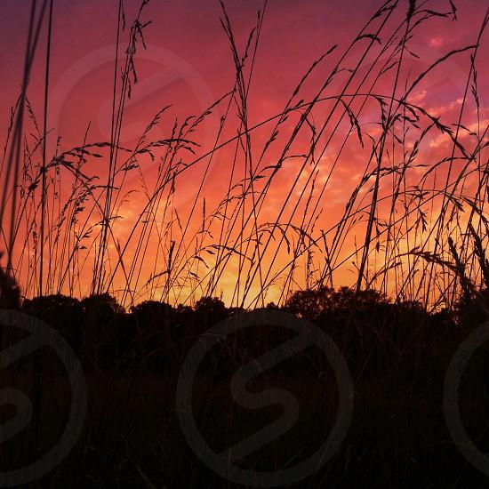 weeds and trees under orange sky  photo