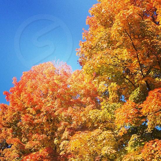 Fall autumn colors orange yellow trees photo