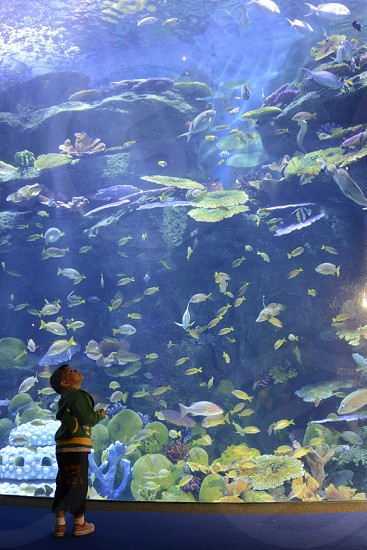 the Siam Ocean World Aquarium in the city centre in Pratunam in the city of Bangkok in Thailand in Southeastasia. photo