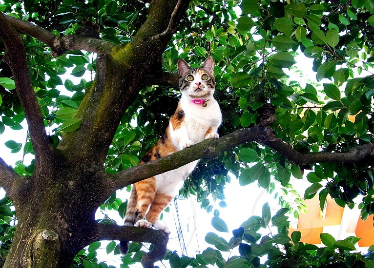 orange tabby cat on the top of the tree branches photo