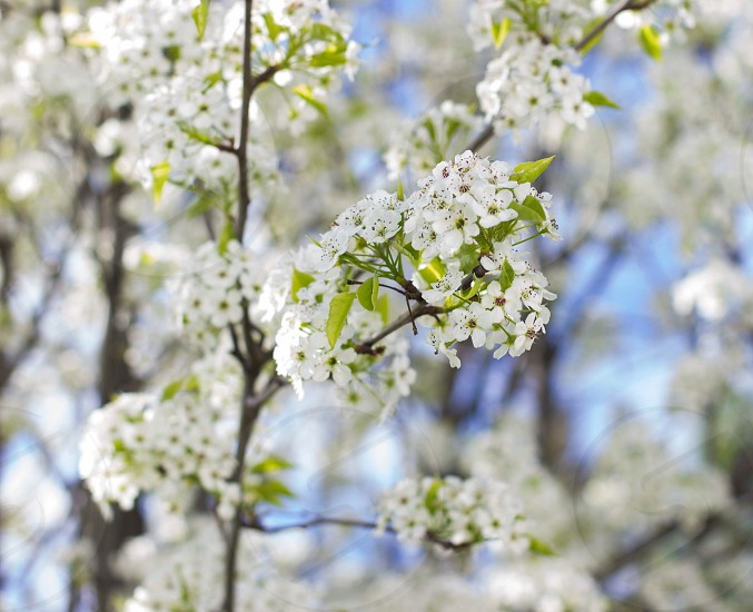 depth of field photograph of white flowering tree photo