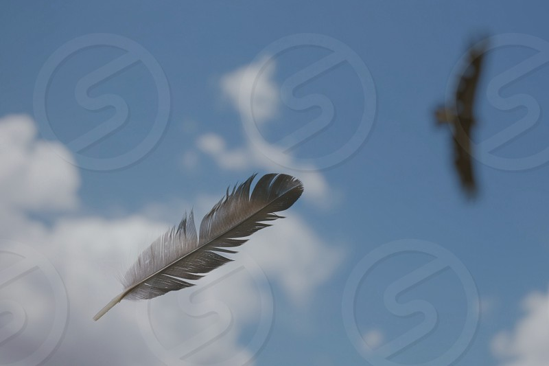 grey feather on mid air under blue sky with white clouds during daytime photo