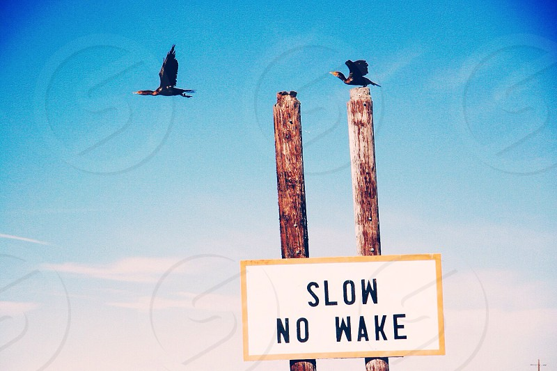 slow no wake sign attached to wood poles photo